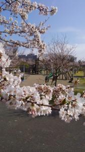 桜さく公園で遊びました